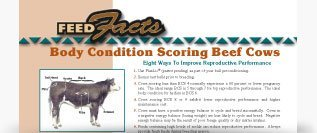 Body Condition Scoring in Beef Cows