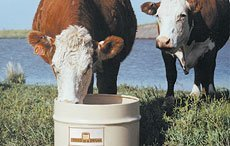 Improving Cattle Forage Digestion