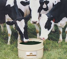 Dry Cow Supplement