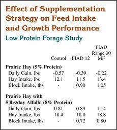 Effect of Supplementation Strategy on Feed Intake and Growth Performance
