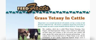 Grass Tetany in Cattle