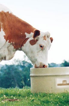 Grass Tetany Supplement